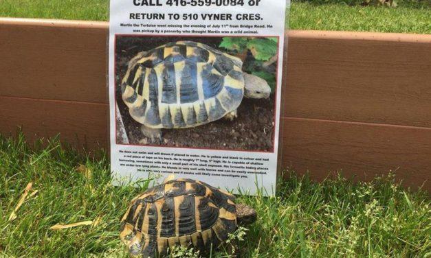 لاکپشت و صاحبش بعد از ۱۱ ماه بهم رسیدند