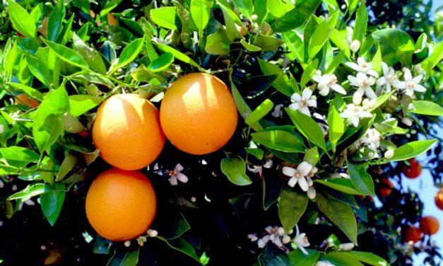 راز کوچک پرتقال/نوشین سالاری