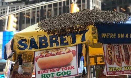 حمله ی زنبورها به دکه ی هات داگ فروشی در میدان تایمز نیویورک
