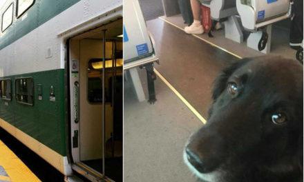مارلی مشهورترین سگ این روزهای تورنتو