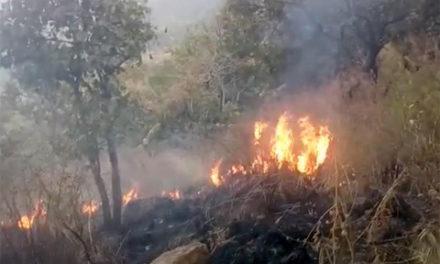 افزایش آتش سوزی در جنگل های کانادا و تاثیرات درازمدت بر محیط زیست