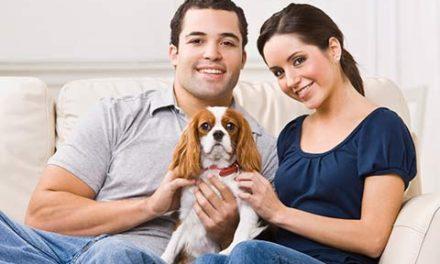 قوانین مربوط به نگهداری حیوانات خانگی (Pet) توسط مستأجر/جعفر کنودی