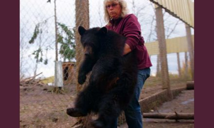 آتش سوزی های بریتیش کلمبیا و مرگ خرس ها