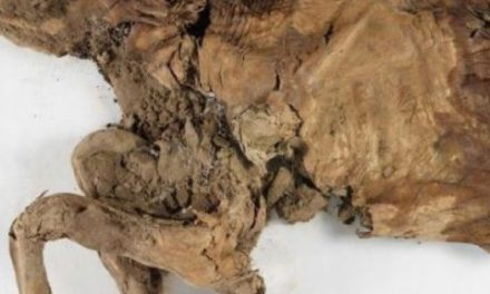 کشف جسد مومیایی شده ی دوحیوان عصر یخی در یوکون