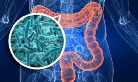 اهمیت وجود باکتری های مفید در روده ها/دکتر خسرو نیستانی