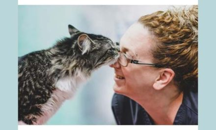 گربه ای که اشتباهی داخل بسته ی پستی به مونترال سفر کرده بود، به آغوش خانواده بازگشت