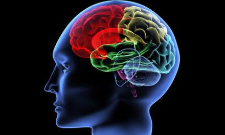 رمزگشایی از سیستم مغزی و فکری جنگ طلبان و خشونت گرایان/نسترن ادیب راد