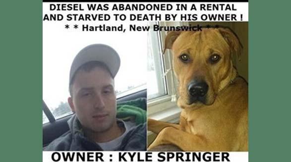 قاتل سگ در نیوبرانزویک دستگیر شد