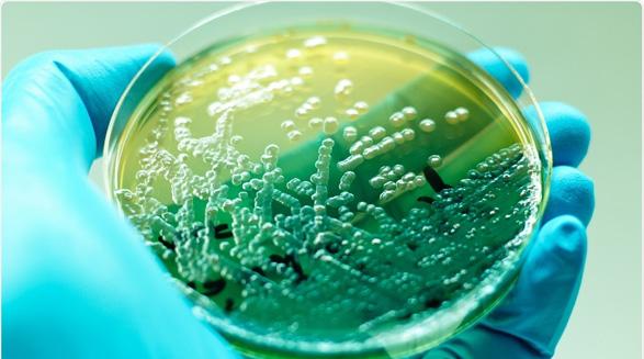 رابطه بین عفونت های کشنده و ژن/خسرو نیستانی