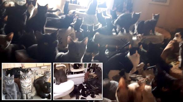 کشف ۳۰۰ گربه در آپارتمانی در نورت یورک