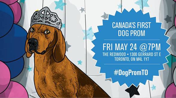 جشن سگ ها در تورنتو