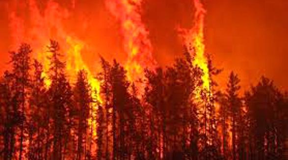 جریمه ی سنگین برای باعث و بانی آتش سوزی استان بریتیش کلمبیا