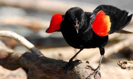 حمله ی پرنده بال قرمز به ساکنان محله ی لیبرتی ویلج