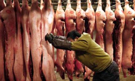 قوانین سختگیرانه تر چین برای بررسی گوشت خوک وارداتی از کانادا