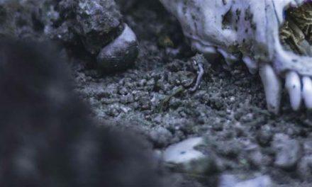فسیل ماهی ۷۰ میلیون ساله در آلبرتا پیدا شد