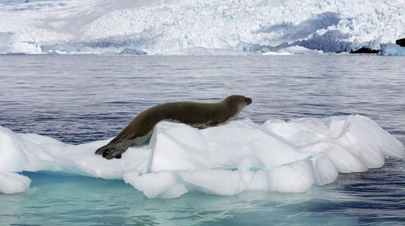 تاثیر گرمایش زمین بر زندگی آبزیان