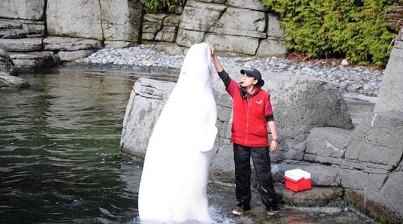 نگهداری از دلفین و نهنگ در کانادا ممنوع می شود