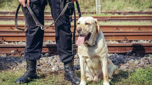 زویی سگ زنده یاب مهربان جان دو دختر نوجوان را نجات داد