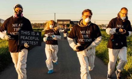 مرغ های بیچاره به دست فعالان حقوق حیوانات آزاد شدند