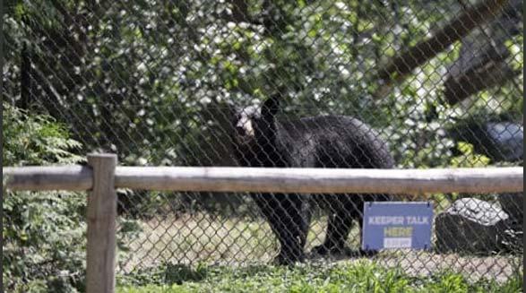 حمله ی خرس سیاه به دختر جوان در باغ وحش ونکوور