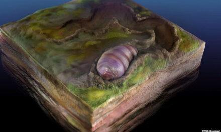 جد ۵۵۵ میلیون ساله تمام موجودات زنده در فسیلی در استرالیا کشف شد