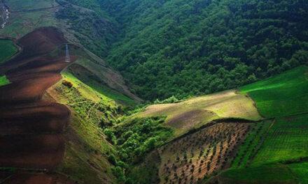زمینخواری با ظاهری کاملا قانونی؛ صدور رای قضایی مبنی بر وقف هزاران هکتار از جنگلهای شمال ایران